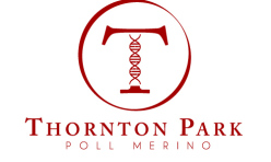 Thornton Park - Poll Merino