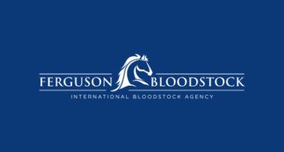Horse Bloodstock Logo Design