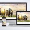Bloodstock Website Design